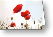 Bud Greeting Cards - Poppies Greeting Card by Olivia Bell Photography