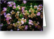 Tiny Flowers Greeting Cards - Poppin Floral Bush Greeting Card by Bill Tiepelman
