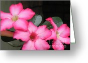Flower Still Life Prints Greeting Cards - Poppin Pink Flowers Greeting Card by Chrisann Ellis