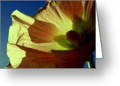 Wedding Flowers Ideas Greeting Cards - Poppy And Me Greeting Card by Louie Rochon