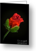 Black  Greeting Cards - Poppy Bud Greeting Card by Toni Chanelle Paisley
