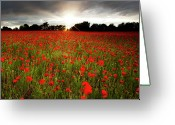 No People Greeting Cards - Poppy Field At Sunset Greeting Card by Doug Chinnery