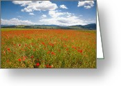 Wild Grass Greeting Cards - Poppy field Greeting Card by Gabriela Insuratelu
