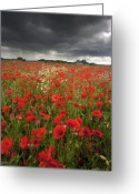 Storm Cloud Greeting Cards - Poppy Field With Stormy Sky In Background Greeting Card by Chris Conway