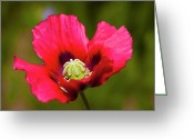 Blooming Plants Greeting Cards - Poppy Greeting Card by Mark Weaver