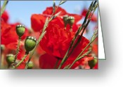 Green Day Greeting Cards - Poppy pods Greeting Card by Jane Rix