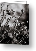 Beach Posters Greeting Cards - Poppy To Grey Greeting Card by Jerry Cordeiro