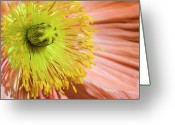 Whorl Greeting Cards - Poppy Whorls 1 Greeting Card by Jeannie Burleson