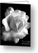 Black And White Floral Greeting Cards - Porcelain Rose Flower Black and White Greeting Card by Jennie Marie Schell