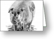Pork Greeting Cards - Porker Pig - Pride Of The Barnyard Greeting Card by Arline Wagner