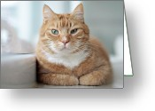 Animal Portrait Greeting Cards - Portrait Cat Greeting Card by Www.andreakamal.com