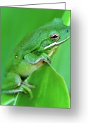 Side View Greeting Cards - Portrait In Green Greeting Card by Jeff R Clow