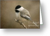 Little Bird Greeting Cards - Portrait of a Blackcapped Chickadee Greeting Card by Reflective Moments  Photography and Digital Art Images