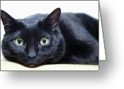 Green Eyes Greeting Cards - Portrait Of A Cat Greeting Card by Sara Wight