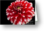 Reception Room Greeting Cards - Portrait of a Dahlia Greeting Card by Cheryl Young
