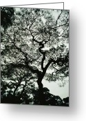 Kansai Triangle Greeting Cards - Portrait Of A Gnarled, Spreading Greeting Card by George F. Mobley