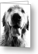Black And White Animal Greeting Cards - Portrait of a Happy Dog Greeting Card by Osvaldo Hamer