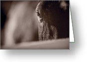 Kentucky Greeting Cards - Portrait of a Horse Kentucky Greeting Card by Steve Gadomski