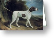 Dogs Painting Greeting Cards - Portrait of a liver and white pointer Greeting Card by George Garrard