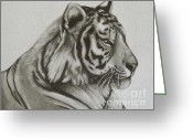 Big Cat Art Prints Greeting Cards - Portrait of a Tiger Greeting Card by Aubrey Campbell