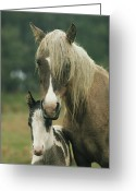 Wild Horses Greeting Cards - Portrait Of A Wild Pony And Her Foal Greeting Card by James L. Stanfield