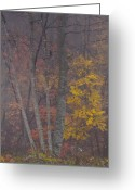 Leaves Photographs Greeting Cards - Portrait of Autumn Greeting Card by Rob Travis