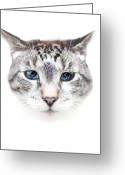 Animal Portrait Greeting Cards - Portrait Of Cat Greeting Card by by Jonathan Fife