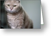 Staring Greeting Cards - Portrait Of Cat Greeting Card by LeoCH Studio