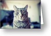 Animal Portrait Greeting Cards - Portrait Of Cat Greeting Card by William Andrew