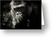 Camera Greeting Cards - Portrait Of Gorilla Greeting Card by MarkBridger