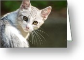 Animal Portrait Greeting Cards - Portrait Of Kitten Greeting Card by Luigi Masella
