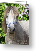 Wear Greeting Cards - Portrait of Lulu Greeting Card by Angela Doelling AD DESIGN Photo and PhotoArt