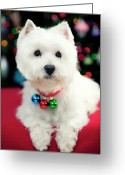 Christmas Lights Greeting Cards - Portrait Of Puppy Greeting Card by Paul L. Harwood