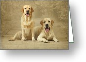 Yellow Dog Greeting Cards - Portrait Of Two Yellow Labradors Greeting Card by Sergey Ryumin