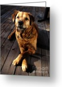 German Shepard Digital Art Greeting Cards - Pose for a Biscuit Greeting Card by Denise Oldridge