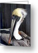 Exotic Birds Greeting Cards - Posing for Pelican Pictures Greeting Card by Amanda Vouglas