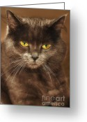Blue Cat Greeting Cards - Posing in Sepia Greeting Card by Joann Vitali