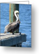 Pier Greeting Cards - Posing Pelican Greeting Card by Carol Groenen