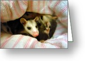 Rehabilitate Greeting Cards - Possums Greeting Card by Michelle Milano
