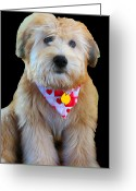 Rescue Animal Greeting Cards - Postcard Wheaten Greeting Card by Vijay Sharon Govender