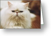 Camera Greeting Cards - Potrait Cat Greeting Card by image by Cereal Mc