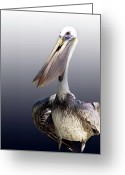 Wildlife Photos Greeting Cards - Pouches Greeting Card by Skip Willits