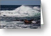 Surge Greeting Cards - Pounding Greeting Card by Michel Soucy