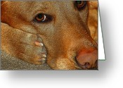 Paws Digital Art Greeting Cards - Pout Greeting Card by Diane E Berry