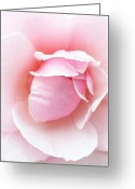 Rose Greeting Cards - Powder Puff Rose Greeting Card by Florene Welebny