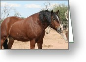 Caballo Greeting Cards - Power and Beauty Greeting Card by Wendi Evans