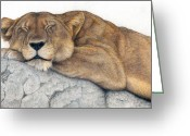Colored Pencil Greeting Cards - Power and Grace at Rest Greeting Card by Pat Erickson