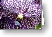 Stamen Greeting Cards - Power of Purple Greeting Card by Karen Wiles