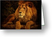 Big Cat Greeting Cards - Pragmatism Greeting Card by Andrew Paranavitana