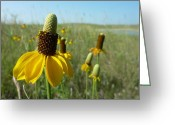 Estephy Sabin Figueroa Greeting Cards - Prairie Coneflowers Greeting Card by Estephy Sabin Figueroa